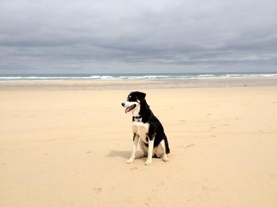 Hayle Towans Beach Dog Friendly