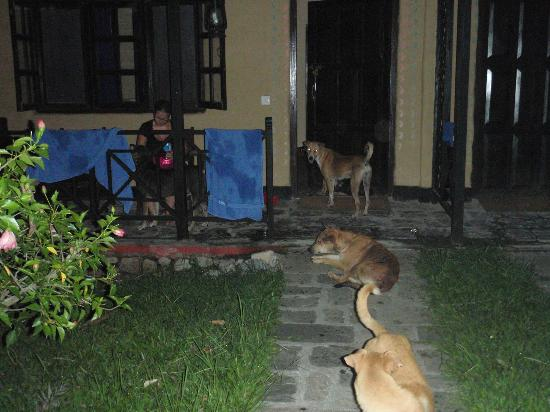 Royal Park Hotel: Our midnight dog clan (during power disruption)