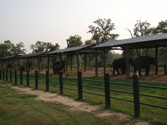 Royal Park Hotel: Elephant breeding centre