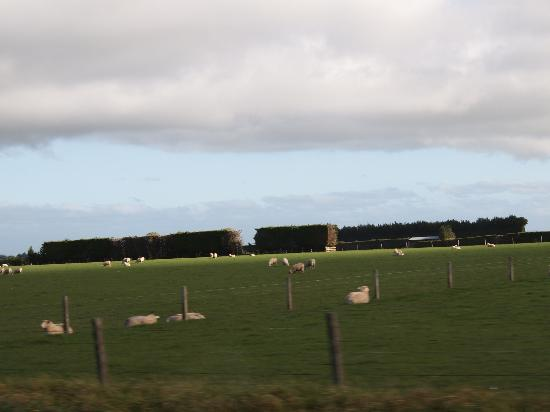 Invercargill TOP 10 Holiday Park : Farm from Window of the room