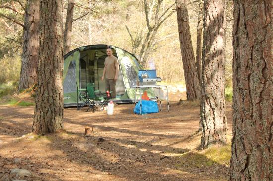 Rothiemurchus Camp and Caravan: amongst the trees