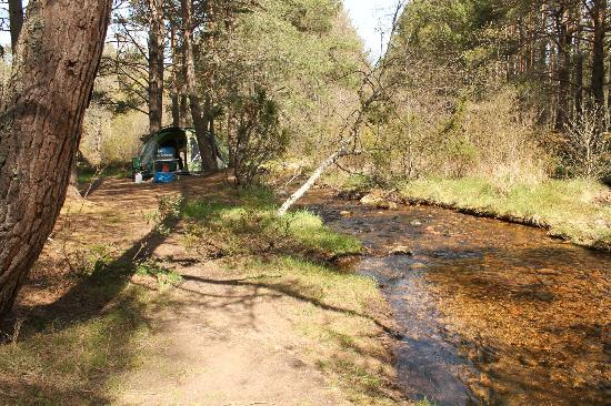 Rothiemurchus Camp and Caravan: pitch by the river