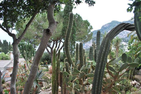 Hotel Bussola: View of a Capri garden