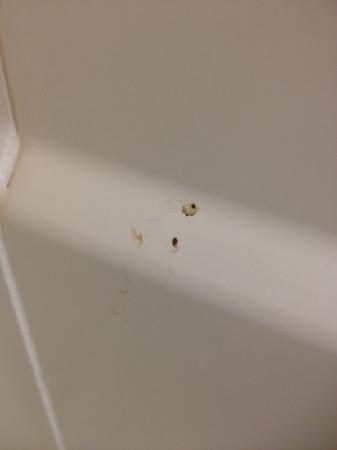 Country Inn & Suites By Carlson, Port Canaveral: Mystery stain on shower wall