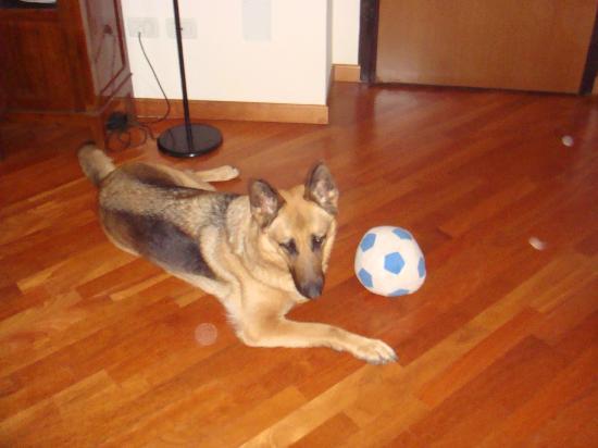 B&B Crispi : The owners dog, Sillia