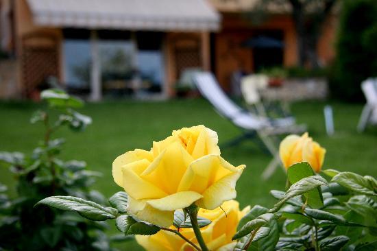 Il B&B di Montenero: giardino