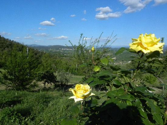 Il B&B di Montenero: panorama dal giardino