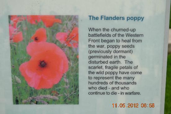 Faubourg-d'Amiens Cemetery: Where Have All the Poppies Gone?