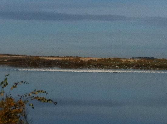 Beachside Bed & Breakfast : Snow Geese Funnel Cloud