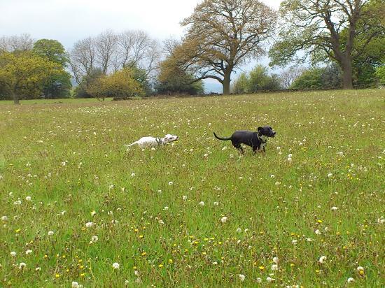 Hay House Farm: Doggie exercise field