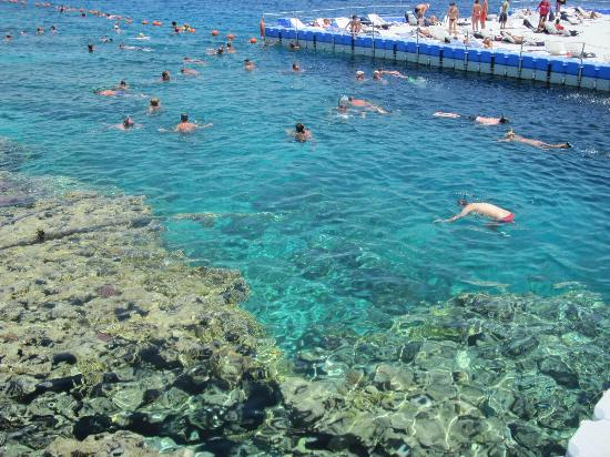 domina coral bay resort casino 5