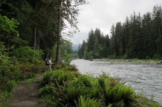 Hoh river olympic national park 2018 all you need to for Cabin rentals olympic national forest