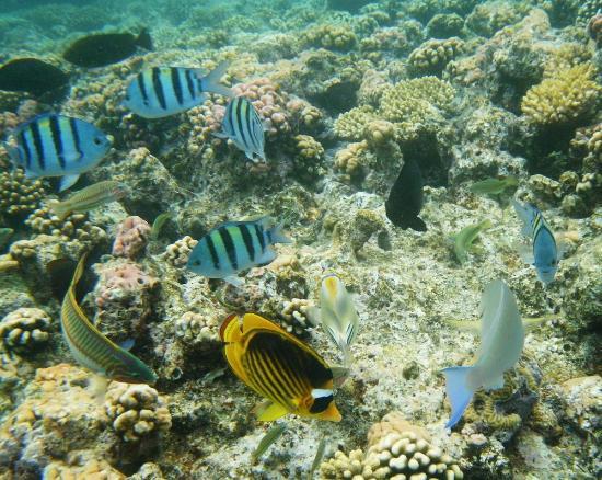 Otium Hotel Aloha: Snorkeling in the Shores Aloha beach.