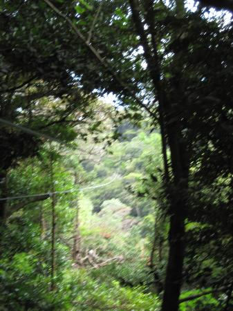 Buena Vista Lodge & Adventure: Zip Lines through the jungle!