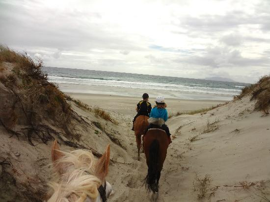Pakiri Beach Horse Rides - Day Tours 사진