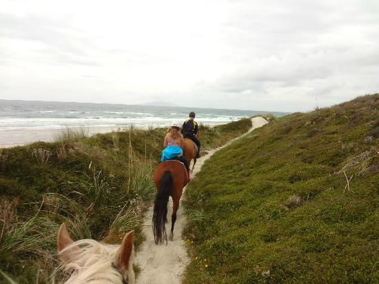 Pakiri Beach Horse Rides - Day Tours: Trail along the dunes