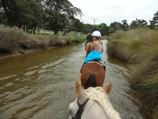 Pakiri Beach Horse Rides - Day Tours: Down the river on the way home