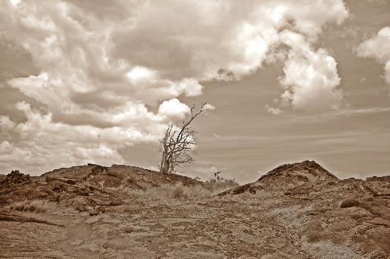 Pu'u Loa Petroglyphs : lava field