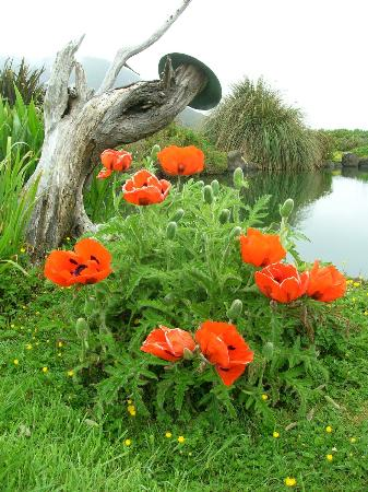 SeaQuest Inn Bed & Breakfast: What gorgeous poppies!