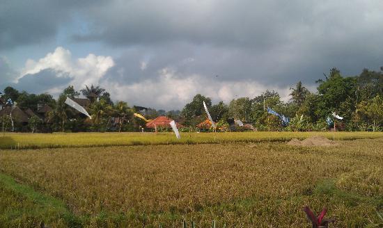 Danasari Homestay : Paddy field