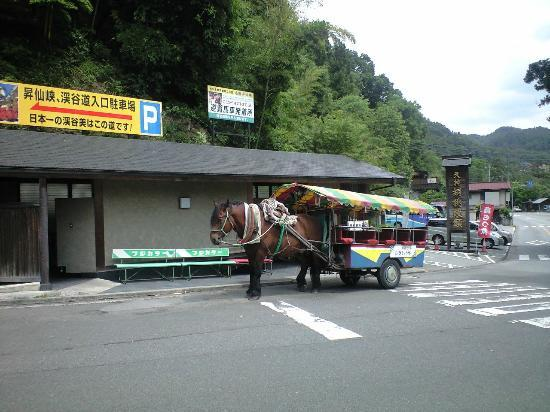 Kofu, Japan: トテ馬車:おとなしい馬で可愛いです。