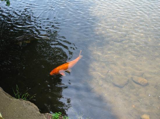Ippekiko Lake: 水がきれい