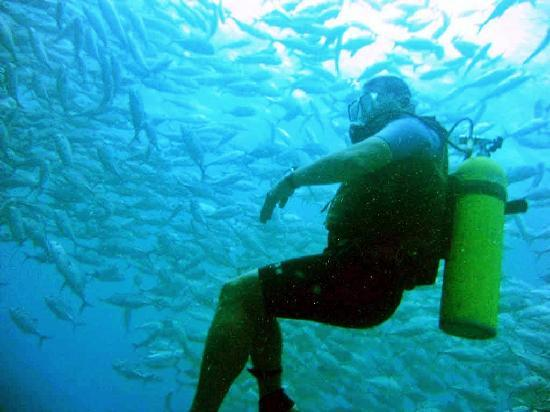 Duka Bay Resort: School of fish