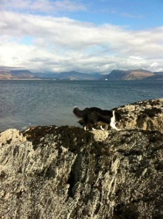 Morar Bed and Breakfast: Robbie the delightful guide dog