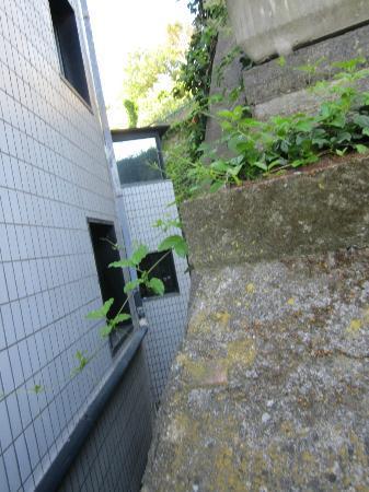President Park Hotel: Blick hinter die Mauer