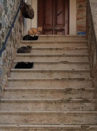 La Provenca: i gatti