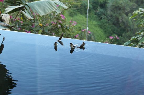 Hanging Gardens of Bali: Watching wildlife from the room