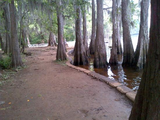 Caddo Lake State Park Karnack TX Top Tips Before You Go With - Caddo lake us map