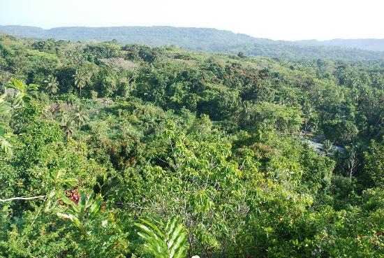 Tamarind Great House: View overlooking lush vegetation