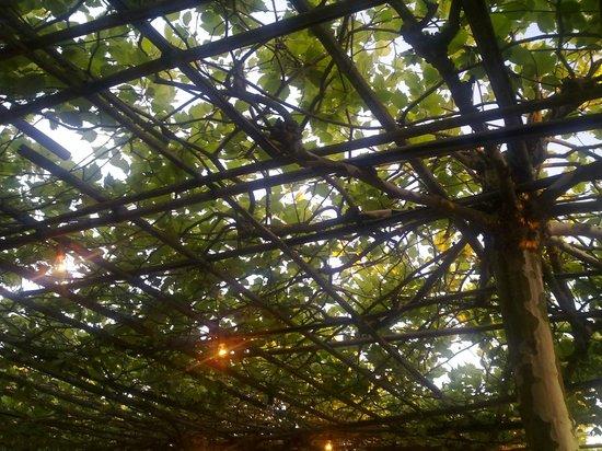 Herve, Belgia: Les platanes de la tonnelle