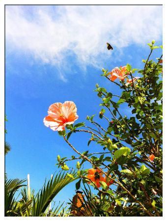 La Casa Del Mar: hibiscus