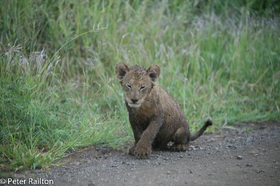 Buckler's Africa: Cub