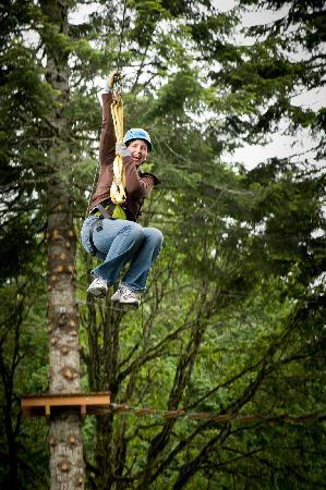 Tree to Tree Adventure Park : Zip lines