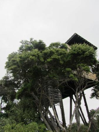 Hapuku Lodge: Treehouse