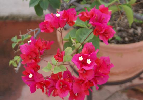 Tangara Guest House: jardin