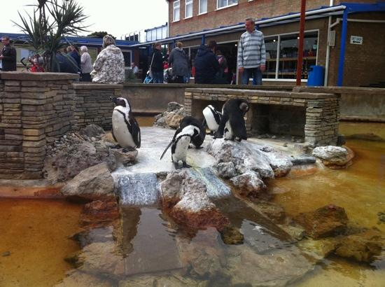 penguins - Picture of Natureland Seal Sanctuary, Skegness ...