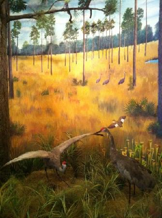 Mississippi Sandhill Crane National Wildlife Refuge: Realistic demo inside museum.
