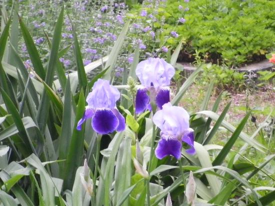 Chatham Guest Rooms: Flowers from the garden