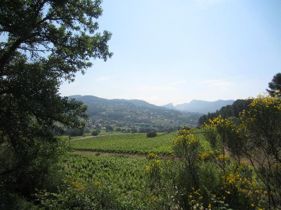 Provence Wine Tours : Provence countryside