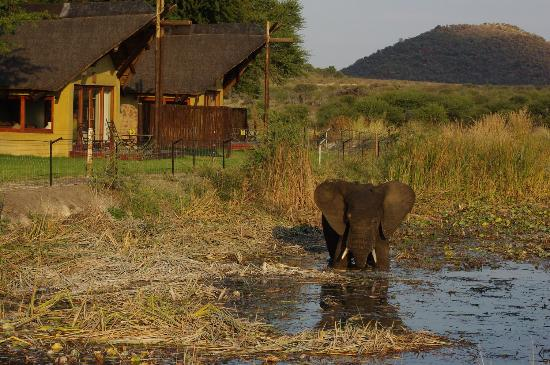 Tau Game Lodge: Elephant at waterhole in front of rooms ...