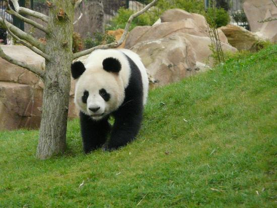 ZooParc de Beauval : Madame