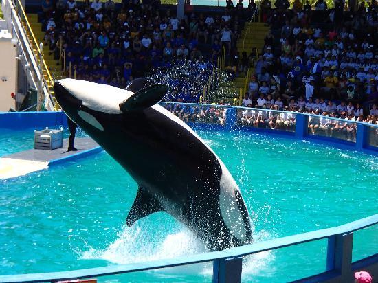 Dolphin Experience Picture Of Miami Seaquarium Key