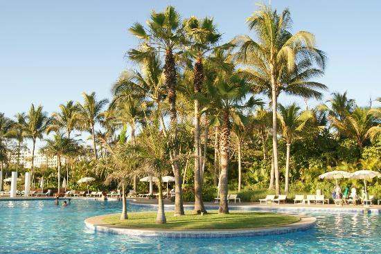 Mayan Palace Nuevo Vallarta: Algunas palmeras del hotel