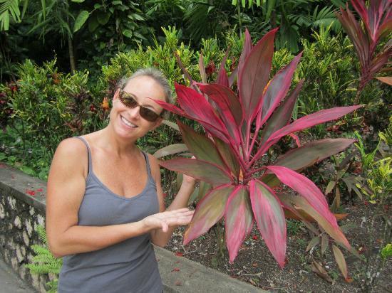 Couples Sans Souci: Pretty red plant