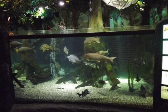 SEA LIFE München: ドナウ川の生き物展示。ちょっと大きめ。
