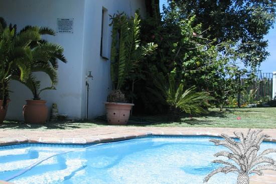 Cycads on Sea Guesthouse : Cool down by the pool